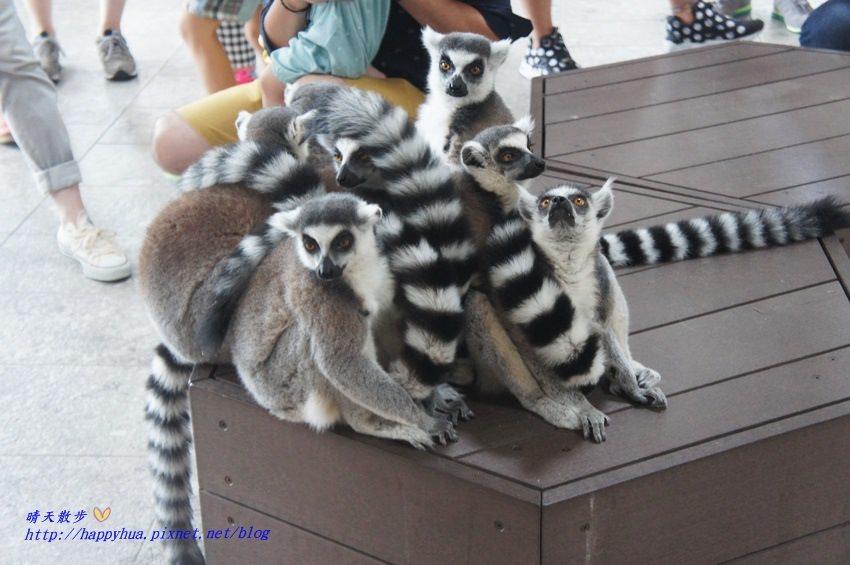 [大阪景點]Nifrel海遊館~大阪Expocity裡活生生的博物館 結合水族館、動物園、美術館 和動物近距離接觸 親子遊必訪景點