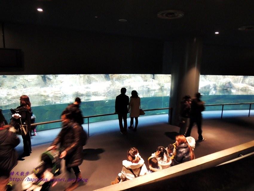 20150131葛西臨海水族園 (114).JPG