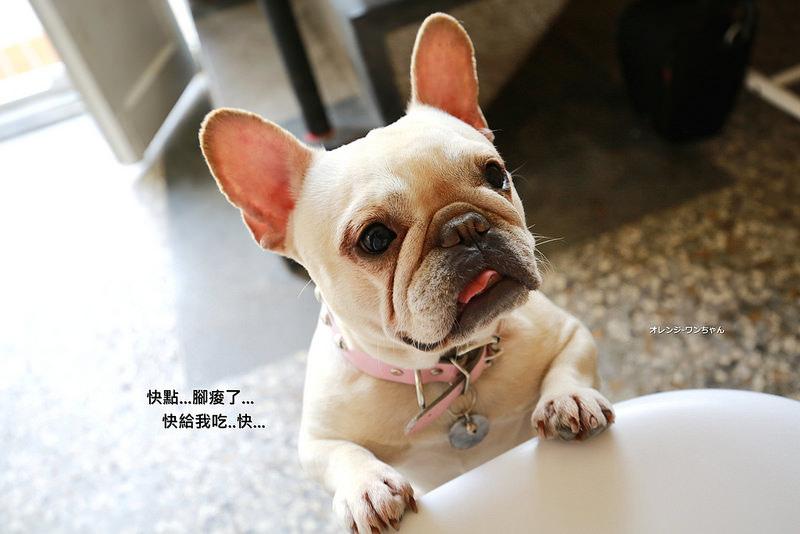 西區 嗝咖啡Gé cafe 寵物餐廳.jpg