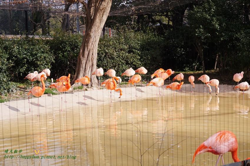 2014大阪天王寺動物園 (40).JPG