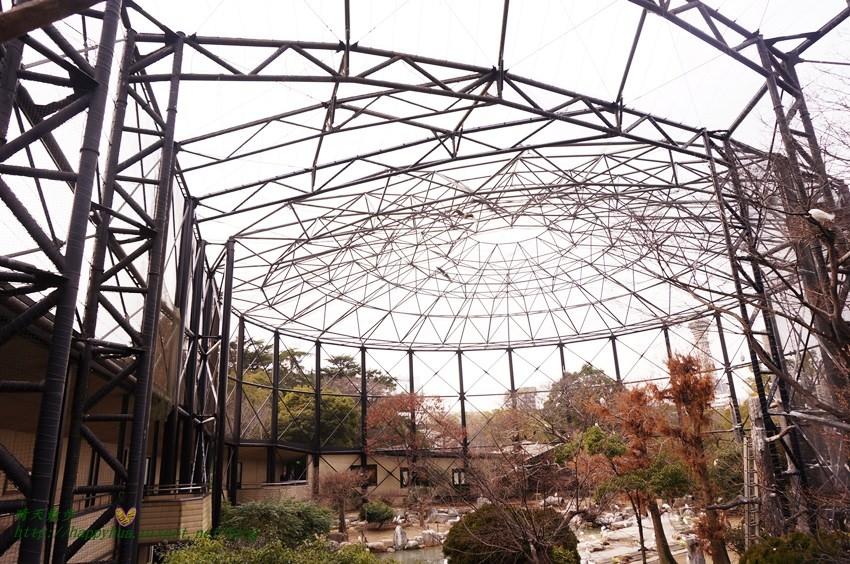 2014大阪天王寺動物園 (58).JPG