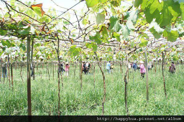 2012果園參訪 (5)