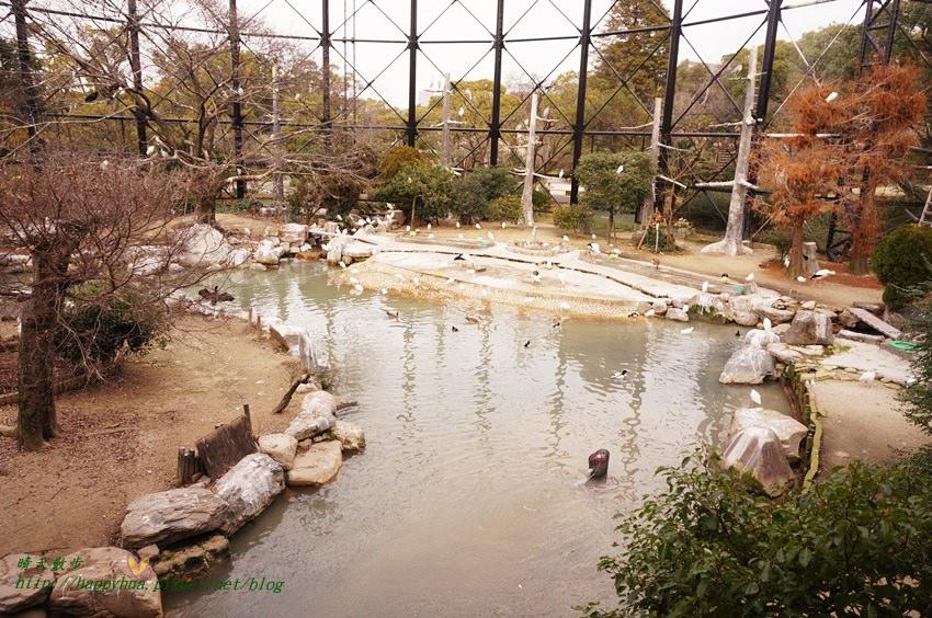 2014大阪天王寺動物園 (57).JPG