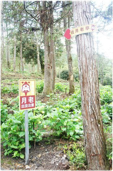 20140511杉林溪 (58).JPG