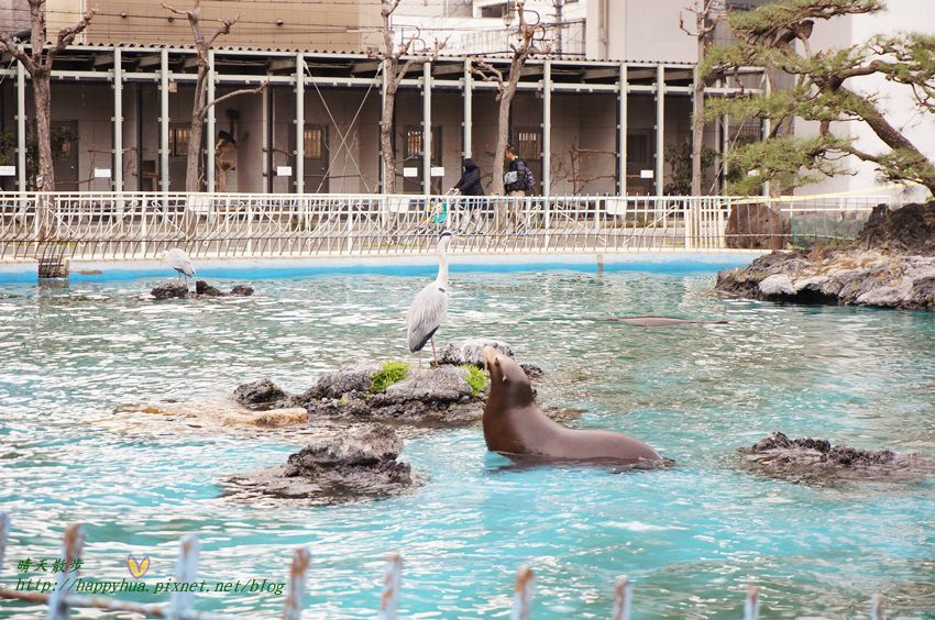 2014大阪天王寺動物園 (48).JPG