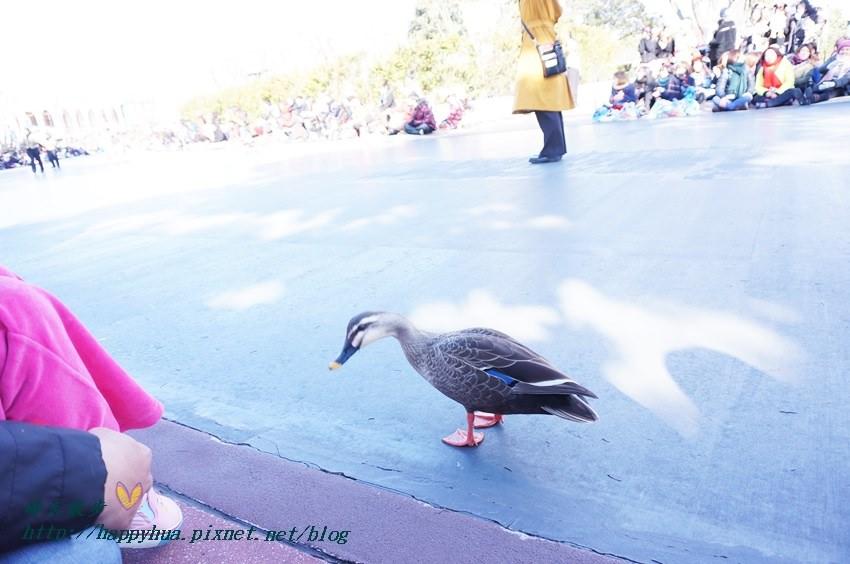 20140205disneyland日間遊行 (5).JPG